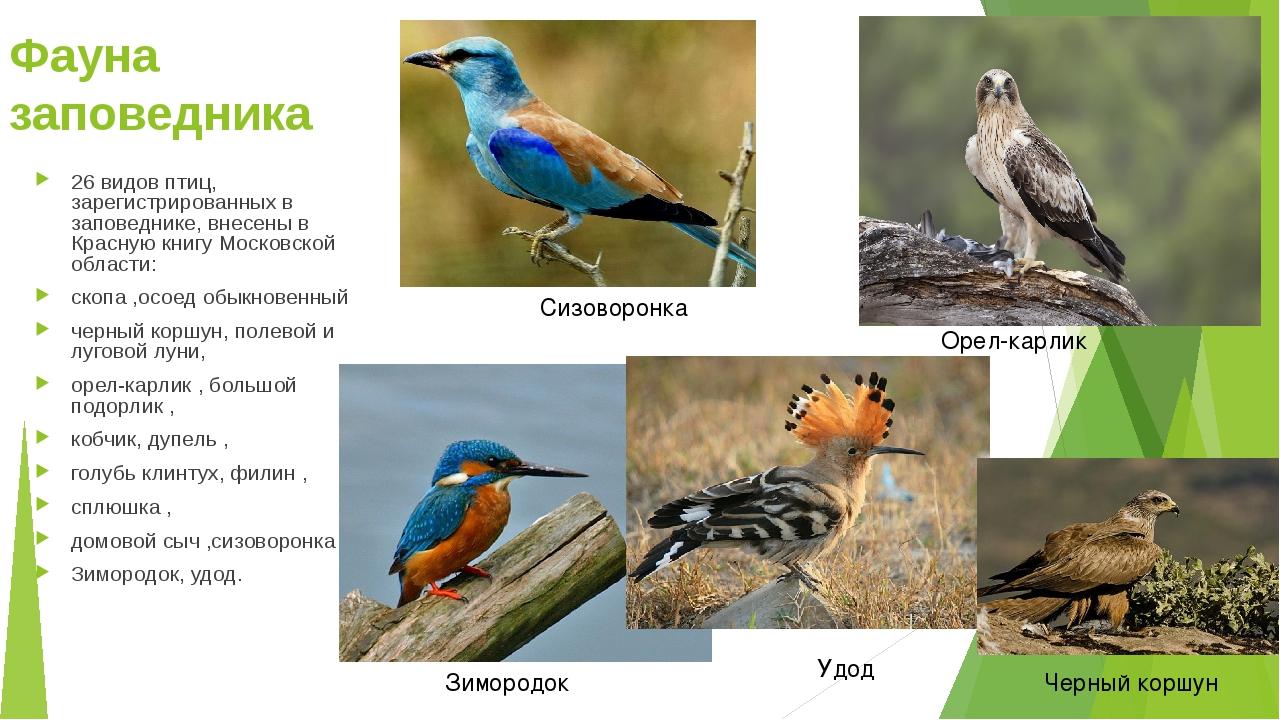 Фауна заповедника 26 видов птиц, зарегистрированных в заповеднике, внесены в...