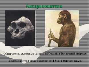 Австралопитеки Обнаружены скелетные остатки в Южной и Восточной Африке. Австр