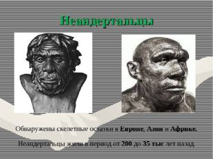 Неандертальцы Обнаружены скелетные остатки в Европе, Азии и Африке. Неандерта
