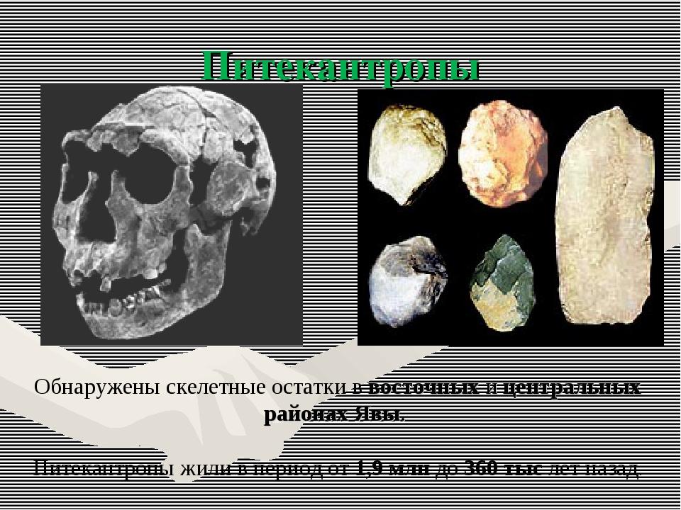 Питекантропы Обнаружены скелетные остатки в восточных и центральных районах Я...