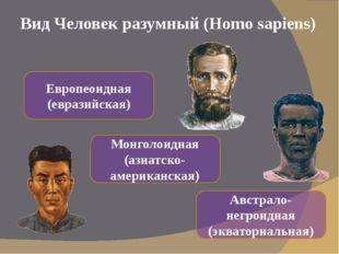 Вид Человек разумный (Homo sapiens) Европеоидная (евразийская) Монголоидная (