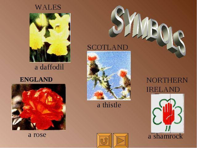 WALES ENGLAND a rose a daffodil SCOTLAND a thistle NORTHERN IRELAND a shamrock