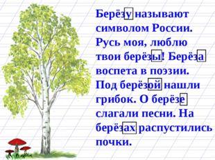 Берёзу называют символом России. Русь моя, люблю твои берёзы! Берёза воспета