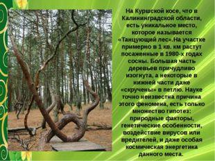 На Куршской косе, что в Калининградской области, есть уникальное место, котор