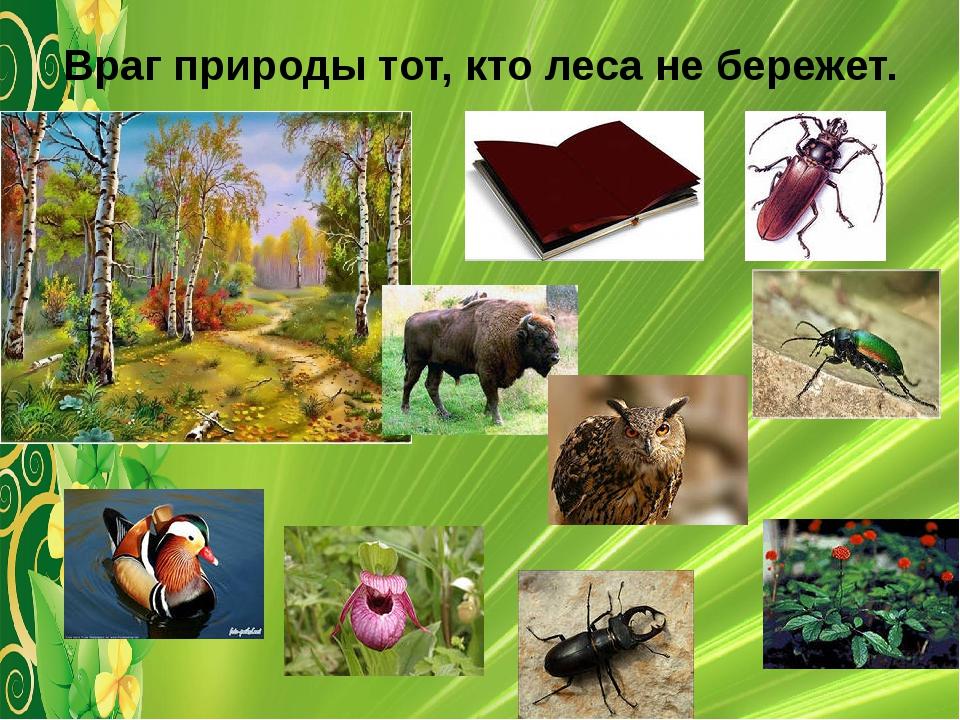 Враг природы тот, кто леса не бережет.