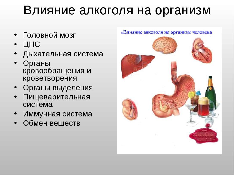 Влияние алкоголя на организм Головной мозг ЦНС Дыхательная система Органы кро...