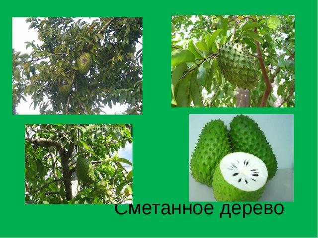 Сметанное дерево