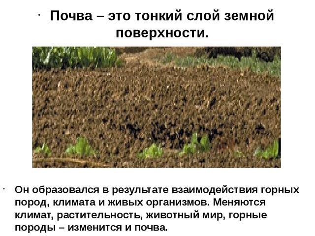 Почва – это тонкий слой земной поверхности. Он образовался в результате взаим...