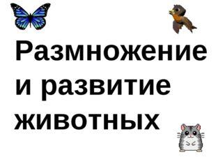 Размножение и развитие животных