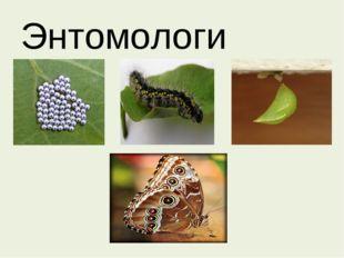 Энтомологи