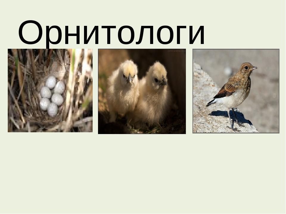 Орнитологи