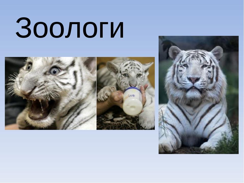 Зоологи
