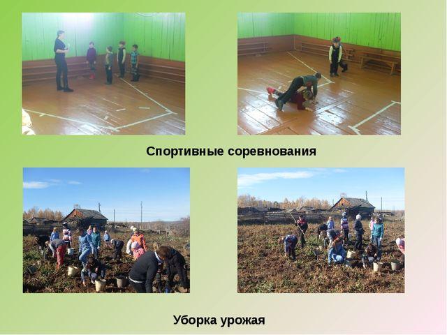 Спортивные соревнования Уборка урожая
