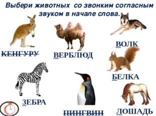 Выбери животных со звонким согласным звуком в начале слова. ЗЕБРА БЕЛКА ВЕРБЛ