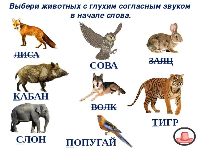 ВОЛК ЗАЯЦ КАБАН ЛИСА Выбери животных с глухим согласным звуком в начале слова...