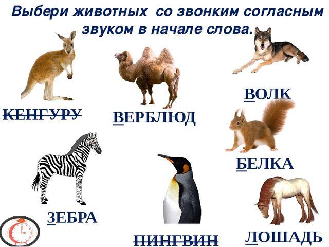 Выбери животных со звонким согласным звуком в начале слова. ЗЕБРА БЕЛКА ВЕРБЛ...