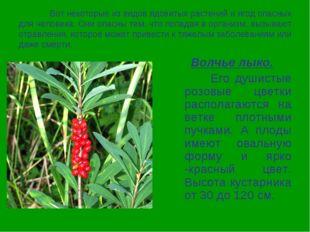 Вот некоторые из видов ядовитых растений и ягод опасных для человека. Они оп
