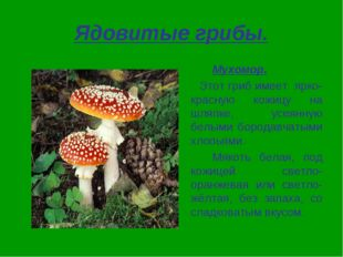 Ядовитые грибы. Мухомор. Этот гриб имеет ярко-красную кожицу на шляпке, усе