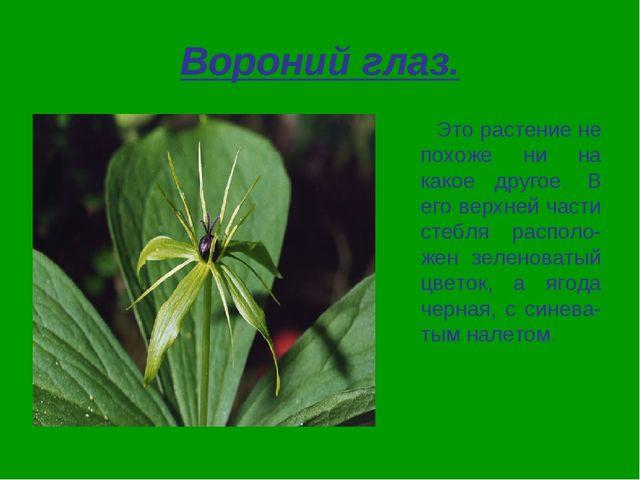 Вороний глаз. Это растение не похоже ни на какое другое. В его верхней части...