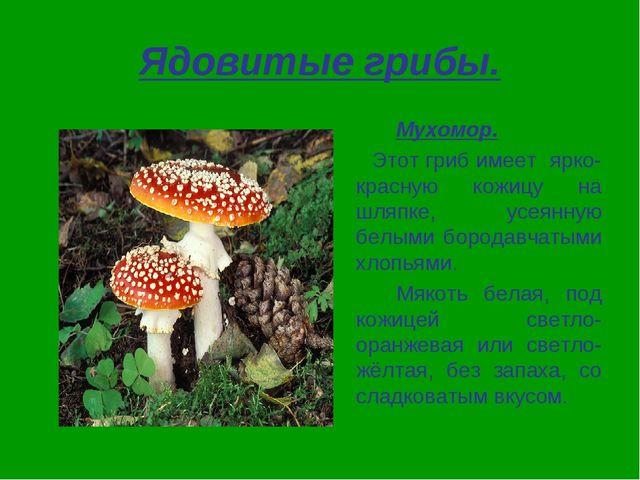 Ядовитые грибы. Мухомор. Этот гриб имеет ярко-красную кожицу на шляпке, усе...
