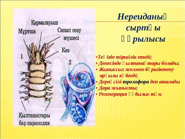 Нереиданың сыртқы құрылысы •Теңізде тіршілік етеді; • Денесінде қылтанақтары...