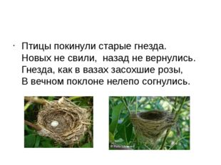 Птицы покинули старые гнезда. Новых не свили, назад не вернулись. Гнезда, ка