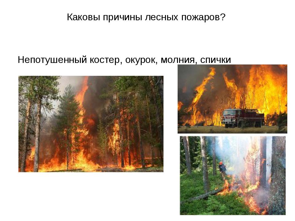 Каковы причины лесных пожаров? Непотушенный костер, окурок, молния, спички