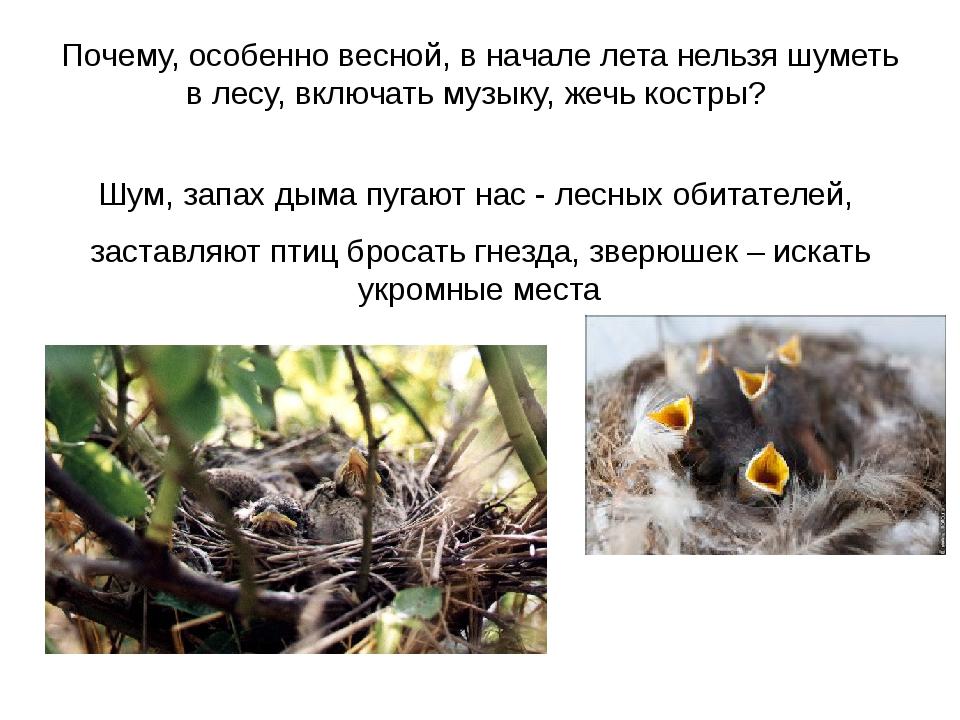 Почему, особенно весной, в начале лета нельзя шуметь в лесу, включать музыку,...