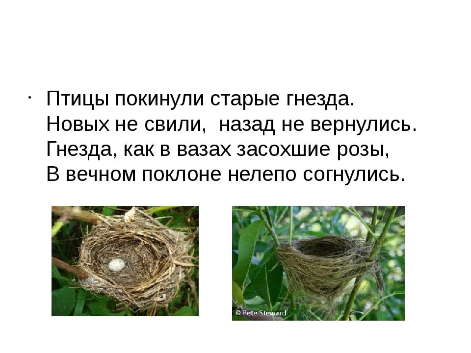 Птицы покинули старые гнезда. Новых не свили, назад не вернулись. Гнезда, ка...