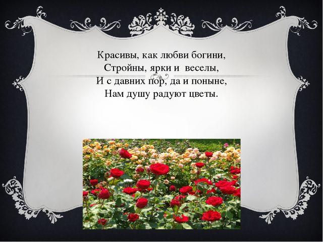 Красивы, как любви богини, Стройны, ярки и веселы, И с давних пор, да и понын...