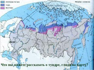 Сороковская Людмила Анатольевна, 4 «В» класс Что вы можете рассказать о тундр