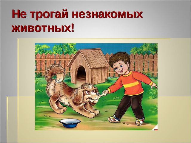 Не трогай незнакомых животных!