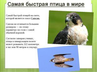 Самая быстрая птица в мире Самой быстрой птицей на свете, которой является со