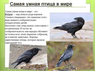 Самая умная птица в мире Самая умная птица в мире – это Во́рон—видптициз