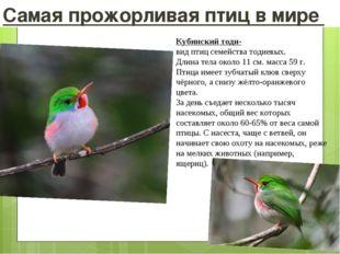 Самая прожорливая птиц в мире Кубинский тоди- видптицсемействатодиевых. Дл