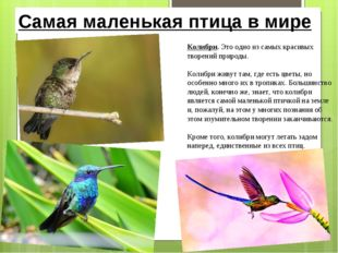 Самая маленькая птица в мире Колибри. Это одно из самых красивых творений при