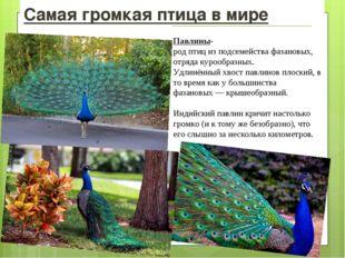 Самая громкая птица в мире Павлины-родптицизподсемействафазановых, отряд