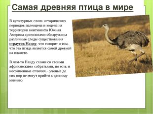 Самая древняя птица в мире В культурных слоях исторических периодов палеоцена