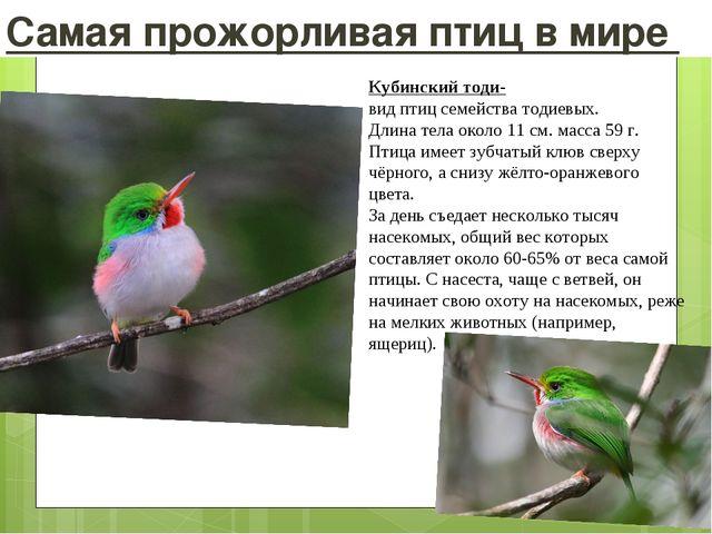 Самая прожорливая птиц в мире Кубинский тоди- видптицсемействатодиевых. Дл...