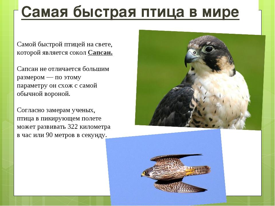 Самая быстрая птица в мире Самой быстрой птицей на свете, которой является со...