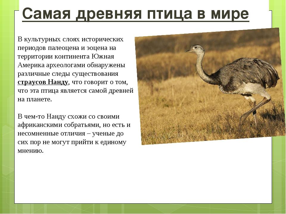 Самая древняя птица в мире В культурных слоях исторических периодов палеоцена...