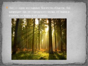 Лес — одно из главных богатств области. Лес защищает нас от городского шума,
