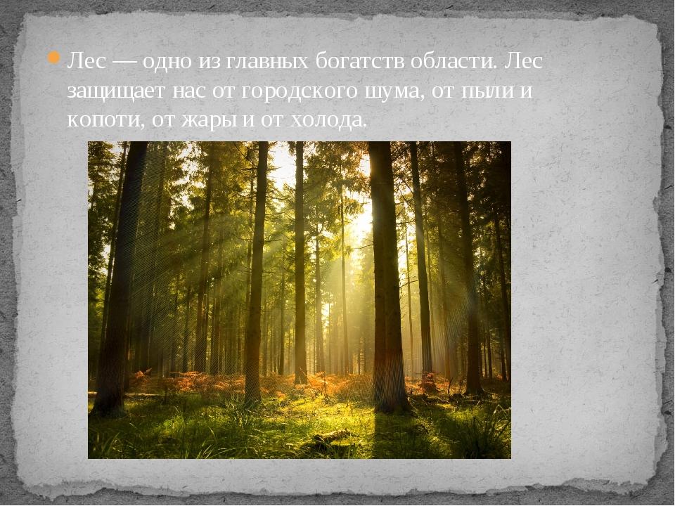Лес — одно из главных богатств области. Лес защищает нас от городского шума,...