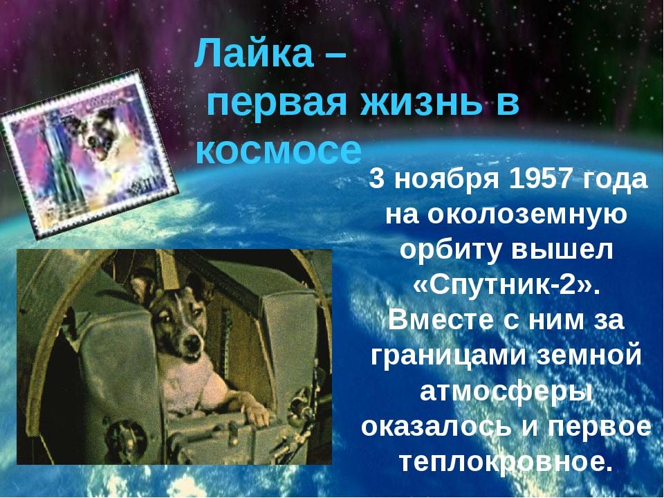 Лайка – первая жизнь в космосе 3 ноября 1957 года на околоземную орбиту вышел...