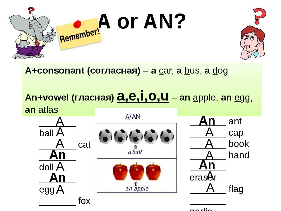 A or AN? A+consonant (согласная) – a car, a bus, a dog An+vowel (гласная) a,e...