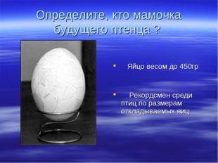 Определите, кто мамочка будущего птенца ? Яйцо весом до 450гр Рекордсмен сред