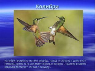 Колибри Колибри прекрасно летают вперёд , назад ,в сторону и даже вниз голово