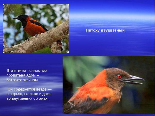 Питоху двуцветный Эта птичка полностью пропитана ядом – батрахотоксином. Он с...