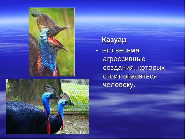 Казуар - это весьма агрессивные создания, которых стоит опасаться человеку.
