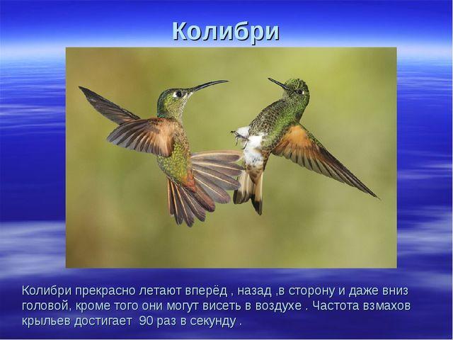 Колибри Колибри прекрасно летают вперёд , назад ,в сторону и даже вниз голово...